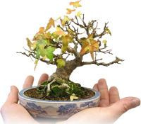 Bonsai Jacobs